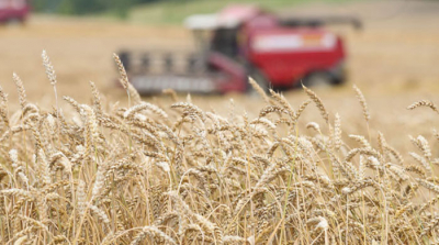Belarus harvests one million tonnes of grain