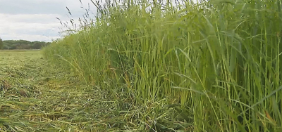 Minsk Oblast farms complete the first grass mowing