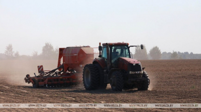Belarus plants half of area under winter grain